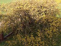 images/galeria/2020/Dzien_Krajobrazu/800_Drzewo_w_krajobrazie_01.jpg