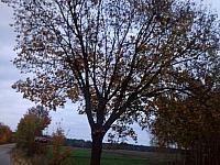 images/galeria/2020/Dzien_Krajobrazu/800_Drzewo_w_krajobrazie_03.jpg