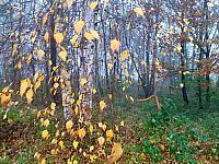 images/galeria/2020/Dzien_Krajobrazu/800_Drzewo_w_krajobrazie_05.jpg
