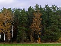 images/galeria/2020/Dzien_Krajobrazu/800_Drzewo_w_krajobrazie_06.jpg