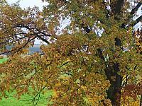 images/galeria/2020/Dzien_Krajobrazu/800_Drzewo_w_krajobrazie_07.jpg