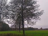 images/galeria/2020/Dzien_Krajobrazu/800_Drzewo_w_krajobrazie_08.jpg