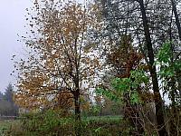 images/galeria/2020/Dzien_Krajobrazu/800_Drzewo_w_krajobrazie_09.jpg