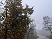 images/galeria/2020/Dzien_Krajobrazu/800_Drzewo_w_krajobrazie_10.jpg