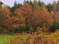 images/galeria/2020/Dzien_Krajobrazu/800_Drzewo_w_krajobrazie_11.jpg
