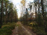 images/galeria/2020/Dzien_Krajobrazu/800_Drzewo_w_krajobrazie_12.jpg