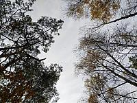 images/galeria/2020/Dzien_Krajobrazu/800_Drzewo_w_krajobrazie_13.jpg