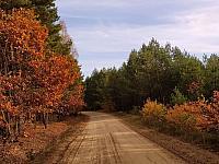 images/galeria/2020/Dzien_Krajobrazu/800_Drzewo_w_krajobrazie_14.jpg