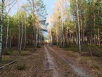 images/galeria/2020/Dzien_Krajobrazu/800_Drzewo_w_krajobrazie_16.jpg