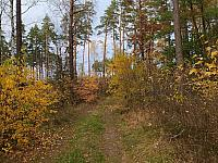 images/galeria/2020/Dzien_Krajobrazu/800_Drzewo_w_krajobrazie_20.jpg