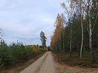 images/galeria/2020/Dzien_Krajobrazu/800_Drzewo_w_krajobrazie_21.jpg