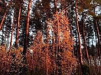 images/galeria/2020/Wystawa_foto_Barwy_jesieni/800_Barwy_jesieni_15.jpg